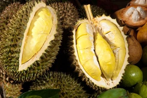 Durian TAT_104PN